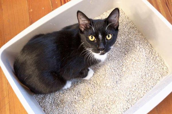 Diaree la pisici – Cand sa mergi la medicul veterinar
