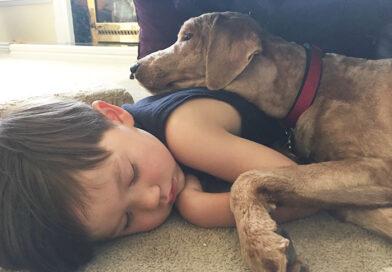 Poate cainele sa doarma in patul copilului? Un studiu a oferit un raspuns surprinzator la intrebare
